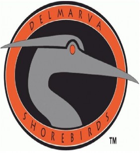 Delmarva Shorebirds
