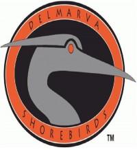 Delmarva Shorebirds